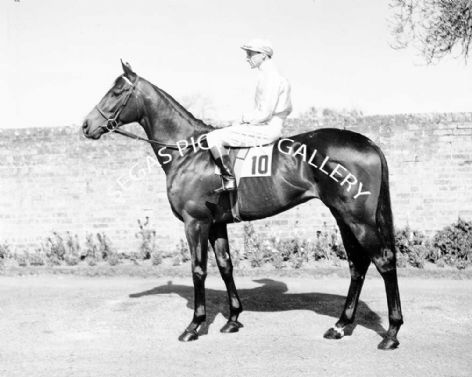 Racehorse Rowland Ward with Jockey W Rickaby